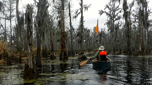 Group kayaking over a swamp
